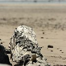 Driftwood by Nathan Dooley