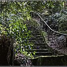 Walk through the Rainforest at the Australian National Botanical Garden by Wolf Sverak
