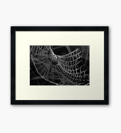 Fragile Beauty Framed Print
