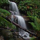 Ferntree Falls by Simon Penrose