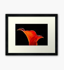 Calla Lily High Contrast Framed Print