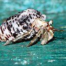 """Marine creatures in Andaman # 2"" by debjyotinayak"