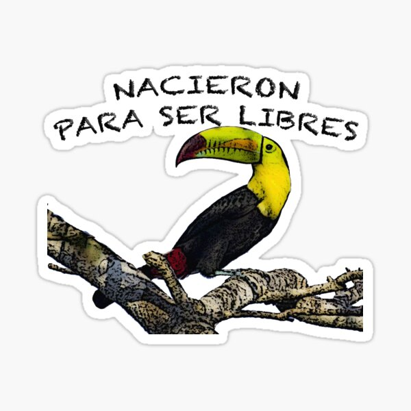 Toucan: Born to be free Sticker