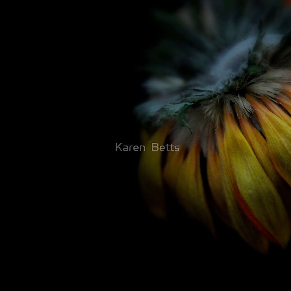 Beauty with fluff by Karen  Betts
