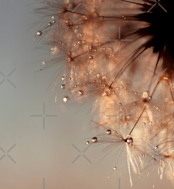droplets of honey by Ingrid Beddoes