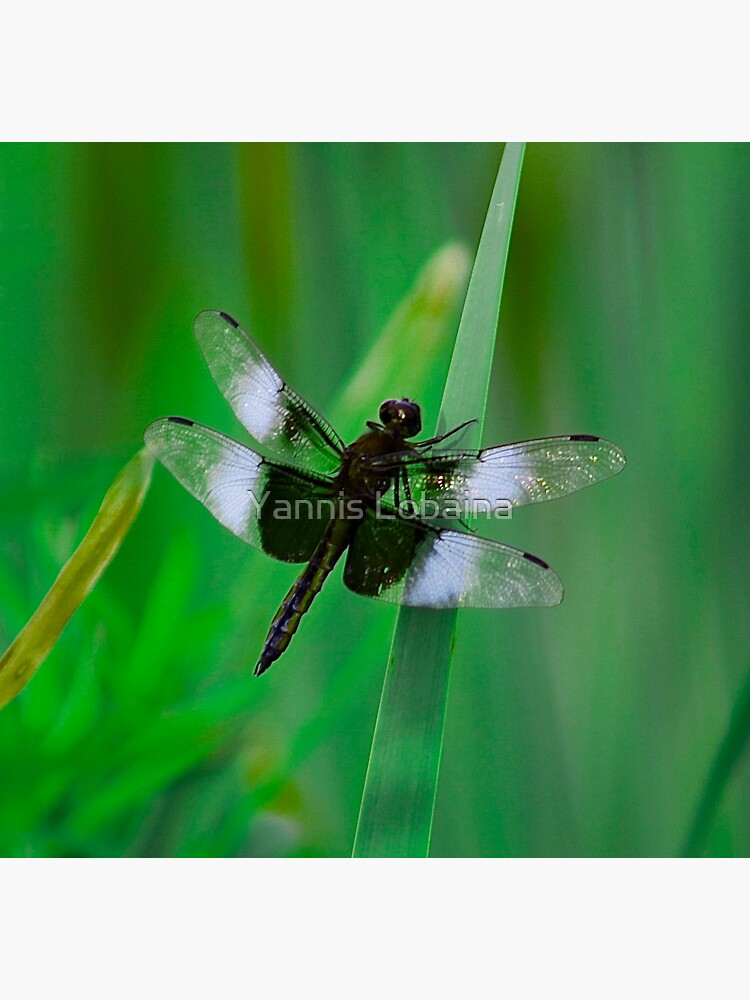 Dragonflies of dreams  By Yannis Lobaina by lobaina1979