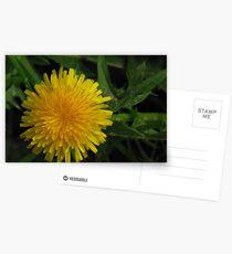 Dandy Postcards