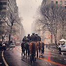 police horses central park  by Danny  Daly