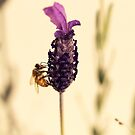Yellow Bee by iltby