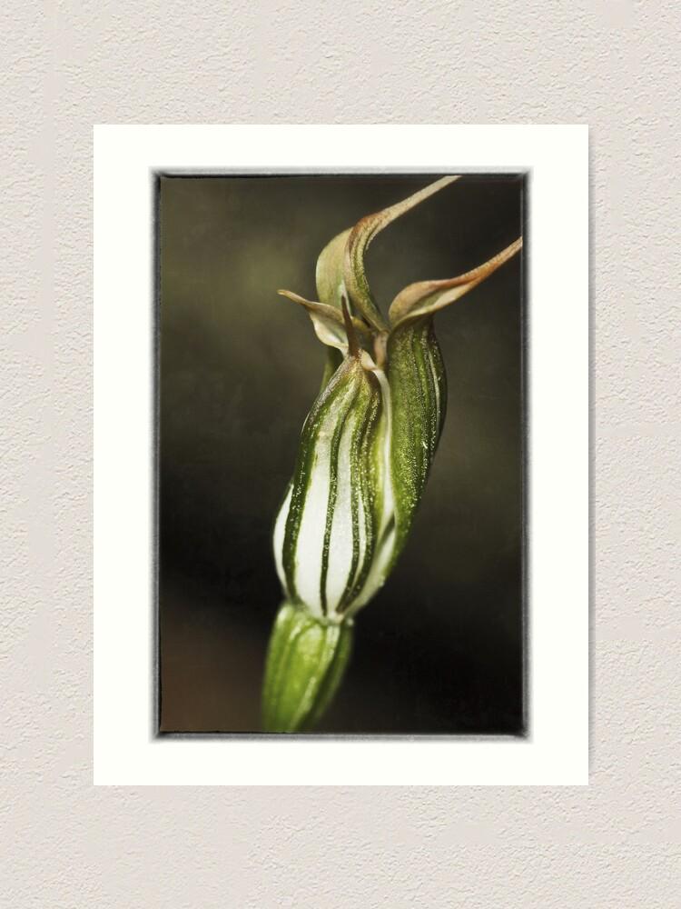 Alternate view of Jug Orchid Art Print