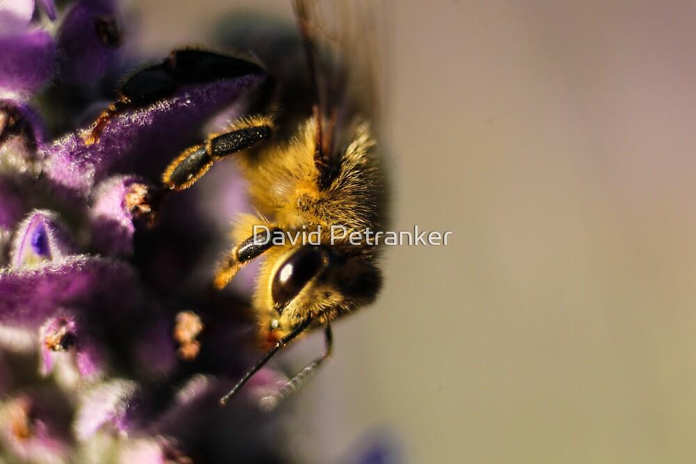Bee by David Petranker