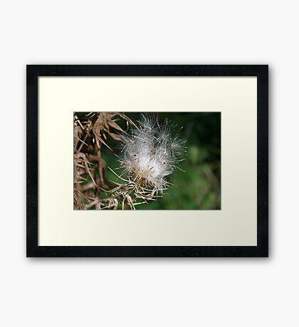Thistledown - The Wish Factory Framed Print