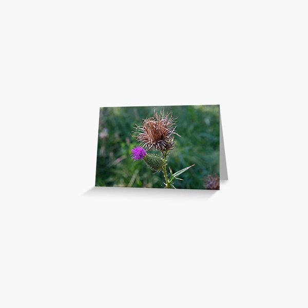 The Spear Thistle Greeting Card