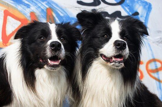 2 Doggies  by Karen Havenaar