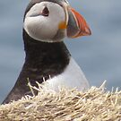 Beautiful puffin by Lorna Taylor