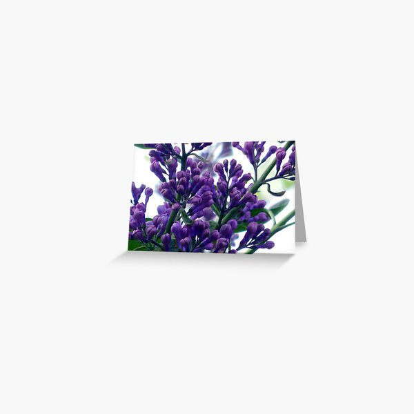 Buds Greeting Card