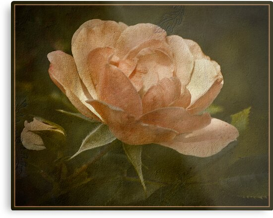 To A Wild Rose by Victoria Jostes