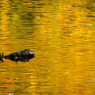 Golden Ripples, Roundhay Park, Leeds by strangelight