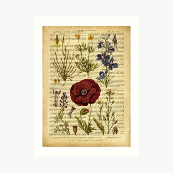 Botanical print, on old book page - flowers Art Print