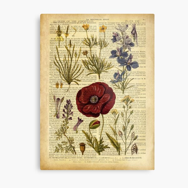 Botanical print, on old book page - flowers Metal Print