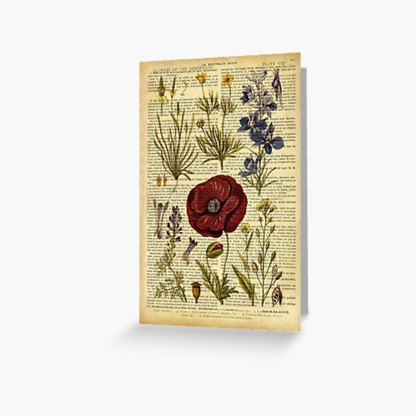 Botanical print, on old book page - flowers Greeting Card