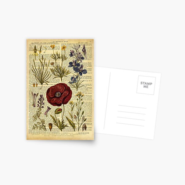Botanical print, on old book page - flowers Postcard