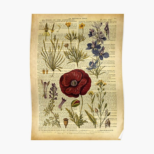 Botanical print, on old book page - flowers Poster