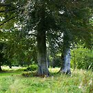 Beautiful Trees Hof ter Linden - Edegem - Belgium by Gilberte