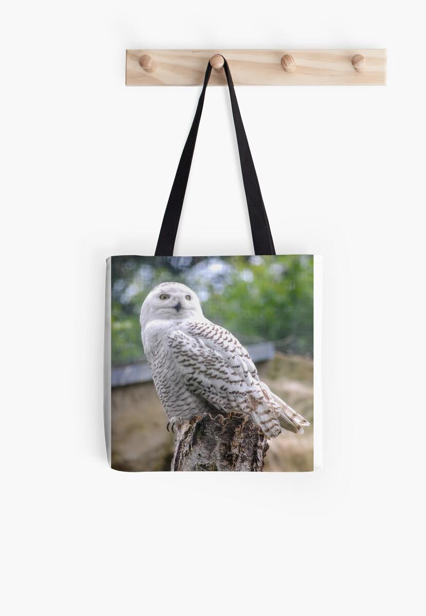 Snow owl  von pASob-dESIGN