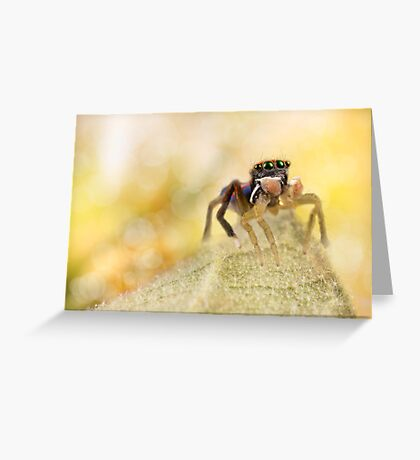 'Male peacock Jumping Spider' Greeting Card