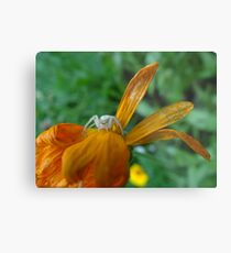 Creepy Crabby Metal Print