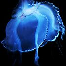 Jelly Fish II by Kerri Ann Crau