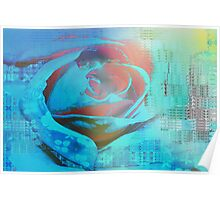 Peach rose highlighted in blue Poster