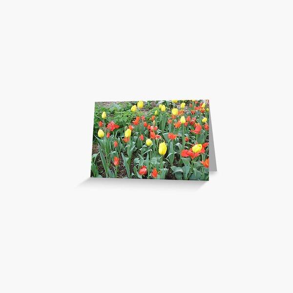 Introducing Leura gardens~Ional7a Greeting Card