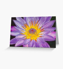 Purple Water Lily Pastel Greeting Card
