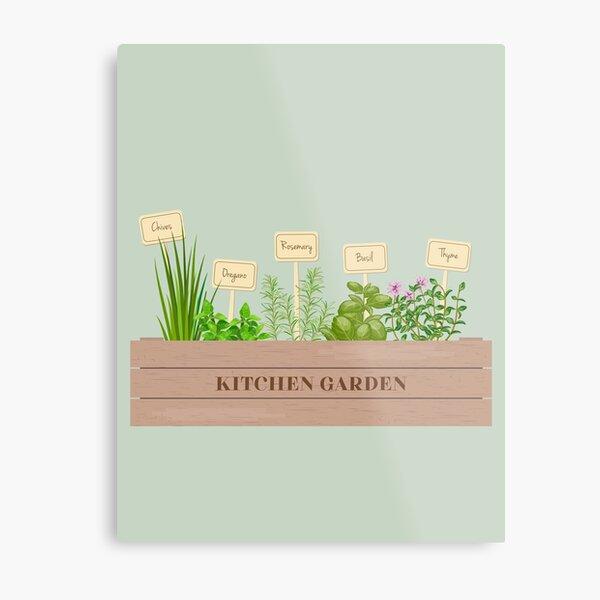 Kitchen Garden Herbs Illustration Metal Print
