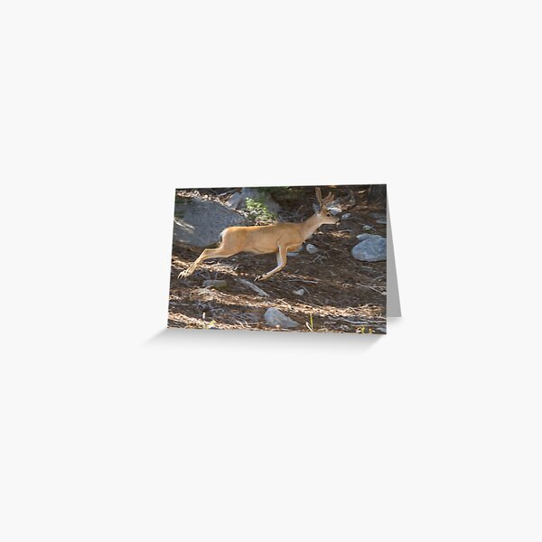 A buck leaps Greeting Card