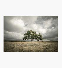 Lone Acacia Photographic Print