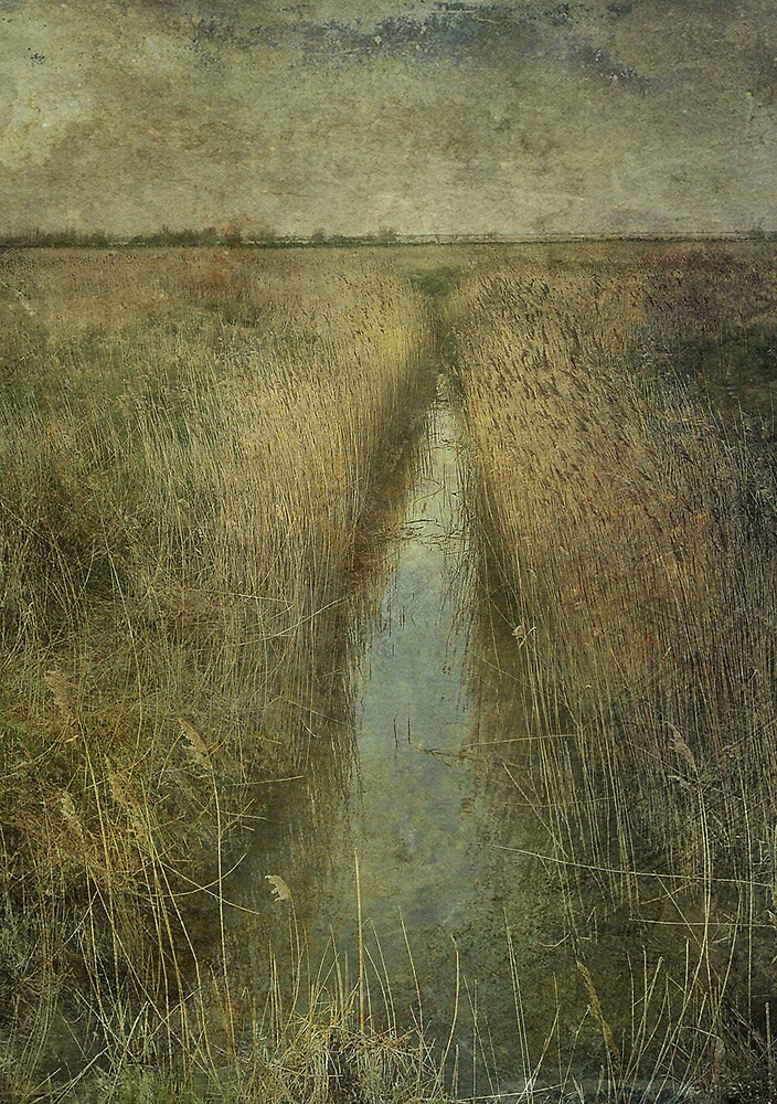 Cley Marshes by Sarah Jarrett