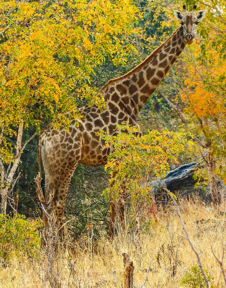 Giraffe in Ordeal trees by Linda Sparks