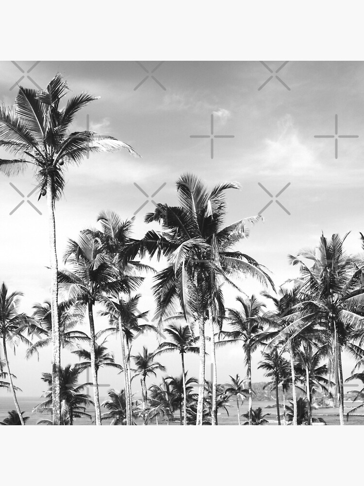 Palmtrees sky black&white by ColorsHappiness