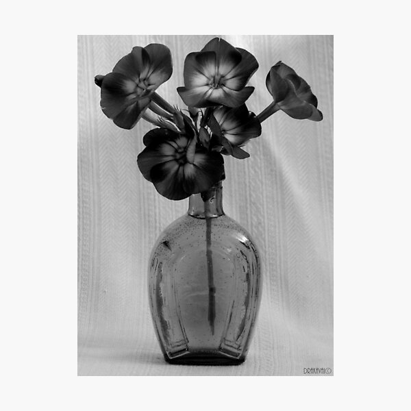 Flowers in horseshoe bottle Photographic Print