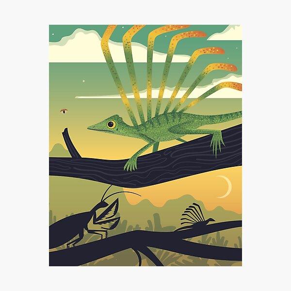 Longisquama Sunset Photographic Print