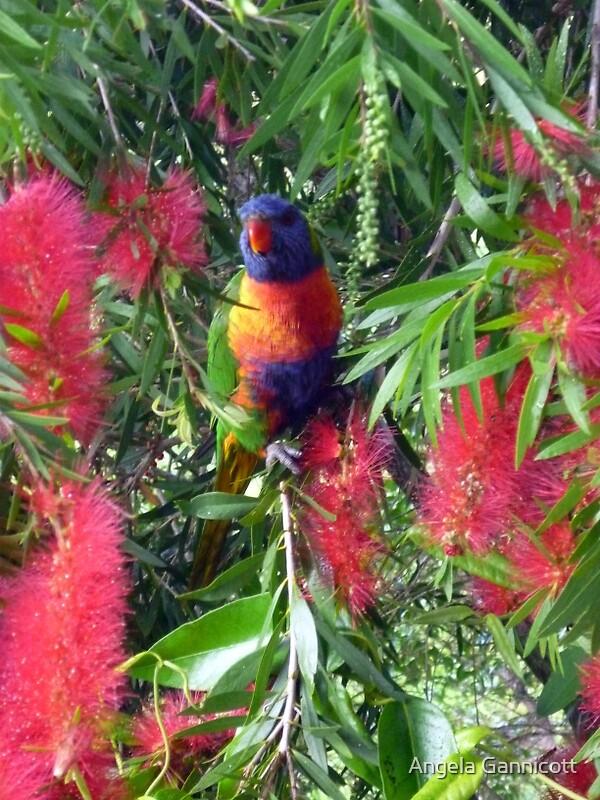 Parrot Peeping through the Bottle Brush by Angela Gannicott
