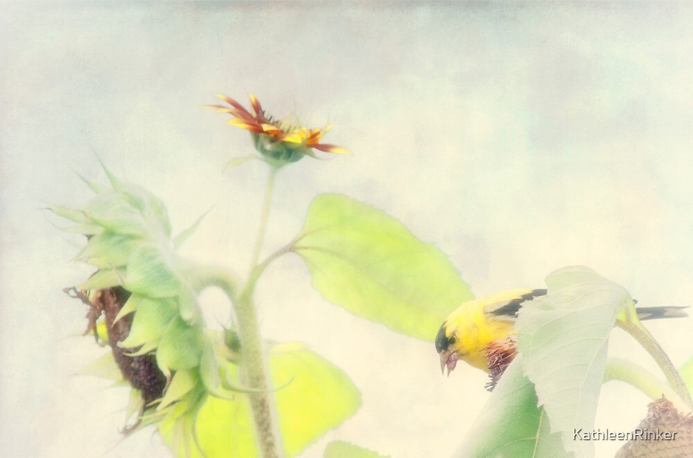 A day in the life of a goldfinch by KathleenRinker