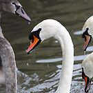 Swan Necks by naturalnomad