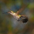 Flying By by Janice Carter