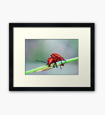 Soldier on! Framed Print