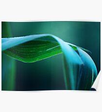 Corn Stalk Leaf Poster