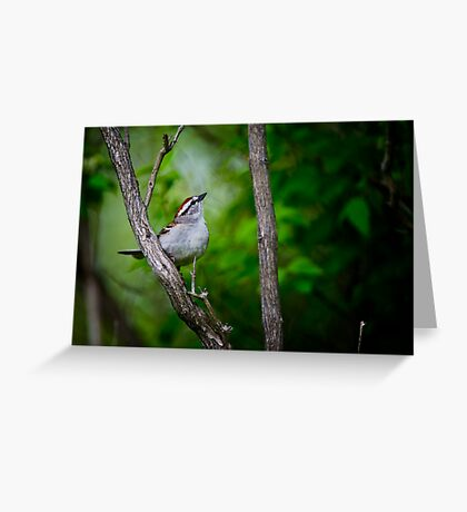 Chipping Sparrow Greeting Card